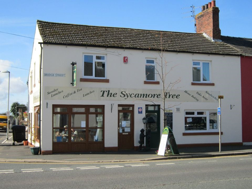 Picture of Sycamore Tree